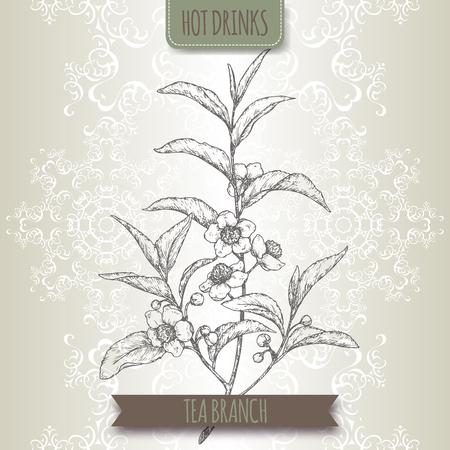 Thee plant aka thee Camellia sinensis takken met bladeren en bloemen. Stock Illustratie