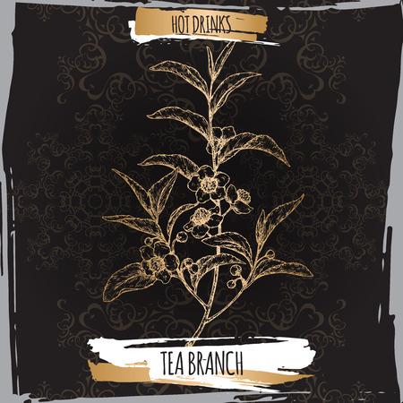 La planta del té aka del té Camellia sinensis ramifica con las hojas y las flores en fondo negro. Foto de archivo - 87123765