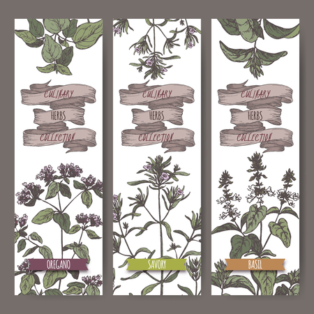 Set of three color vector banners with oregano, savory, basil sketch.