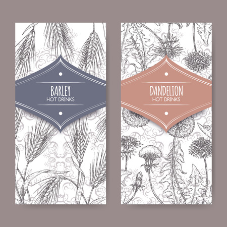 Set of two labels with Barley aka Hordeum vulgare and Dandelion aka Taraxacum officinale sketch. Hot drinks collection. Illustration