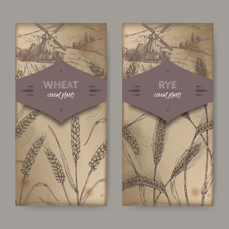 Set of two labels with bread wheat aka Triticum aestivum, rye aka Secale cereale and field landscape sketch. Cereal plants collection. Great for bakery, agriculture, farming design.