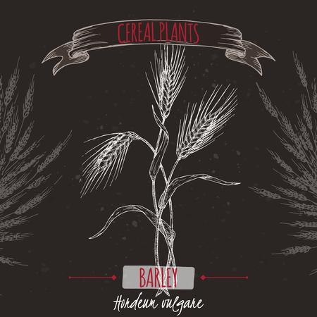 Barley aka Hordeum vulgare sketch on black. Cereal plants collection.