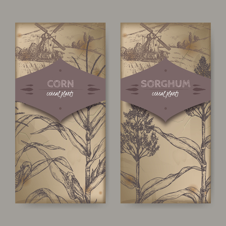 Ste of two vintage labels with Sorghum bi-color and corn aka maize or zea mays sketch, cereal plants collection.