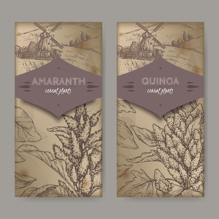 Set of two labels with Amaranthus cruentus aka amaranth and Chenopodium quinoa sketch. Cereal plants collection. Illustration