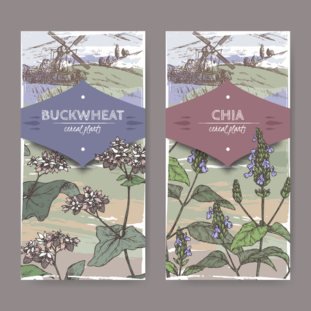 Two labels with Fagopyrum esculentum aka buckwheat and Salvia hispanica aka chia color sketch. Cereal plants collection.