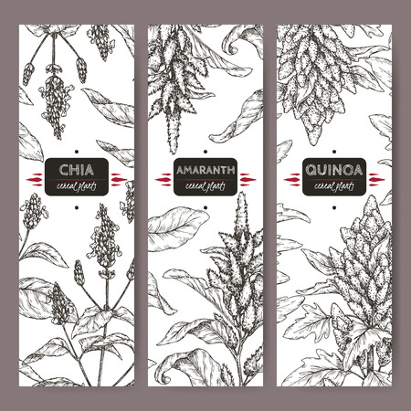 Set of three labels with amaranth, quinoa and chia sketch. Cereal plants collection.