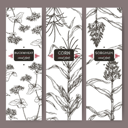 Ste of three vintage labels with Sorghum, Corn and Buckwheat sketch. Cereal plants collection.