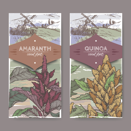 Set of two labels with Amaranthus cruentus aka amaranth and Chenopodium quinoa color sketch. Illustration