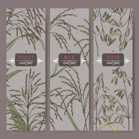 Set of three labels with Asian rice, Proso millet and oats color sketch.