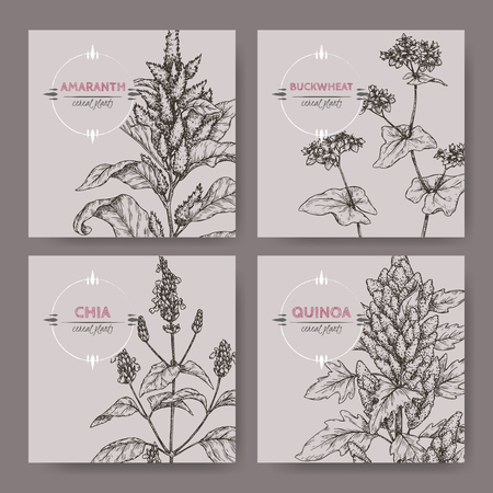 Set of four banners with amaranth, quinoa, chia and buckwheat sketch. Cereal plants collection Vector illustration.  イラスト・ベクター素材