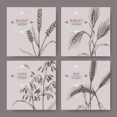 Set of four banenrs with bread wheat, rye, barley and oats sketch. Cereal plants collection. Vettoriali