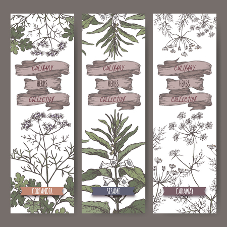 Set of three color vector banners with coriander, sesame, caraway sketch. Culinary herbs collection.