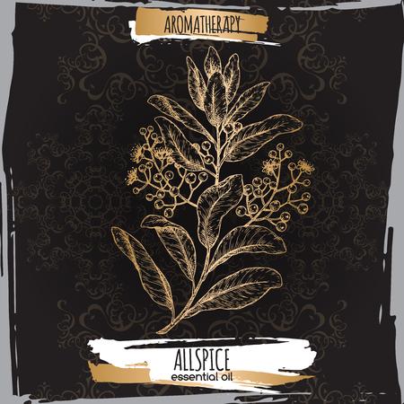 Pimenta dioica aka allspice branch sketch on black background.