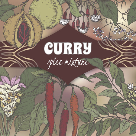 Color curry mixture template with curry tree, turmeric, coriander, chili pepper, clove, nutmeg sketch. Curry collection. Great for cooking, gardening design.