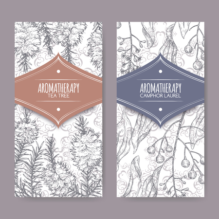 2 labels with tea tree and camphorwood branch sketch on elegant lace background. Great for traditional medicine, perfume design, cooking or gardening. Illustration