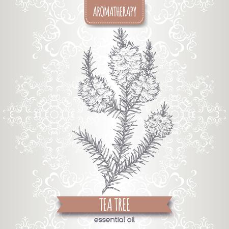 Melaleuca alternifolia aka tea tree branch sketch on elegant lace background. Great for traditional medicine, perfume design, cooking or gardening.