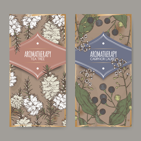 2 labels with tea tree and camphorwood branch color sketch on vintage background. Great for traditional medicine, perfume design, cooking or gardening. Illustration
