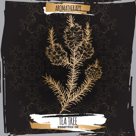 Melaleuca alternifolia aka tea tree branch sketch on black background. Great for traditional medicine, perfume design, cooking or gardening. Illustration