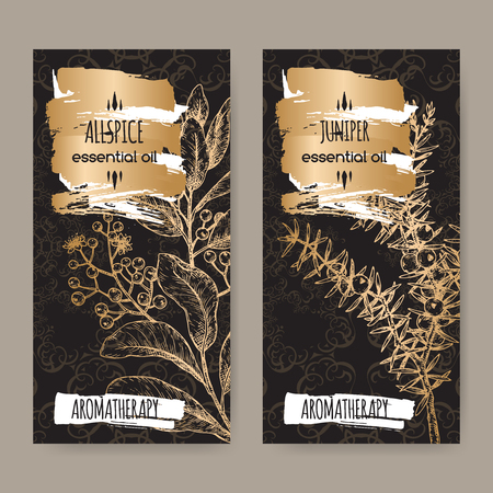 Two labels with Juniperus communis aka juniper and Pimenta dioica aka allspice sketch on black lace background. Great for traditional medicine, perfume design, cooking or gardening. Vector Illustration