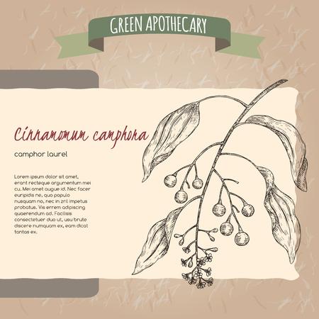 Cinnamomum camphora aka camphorwood or camphor laurel sketch. Green apothecary series. Great for traditional medicine, gardening or cooking design.