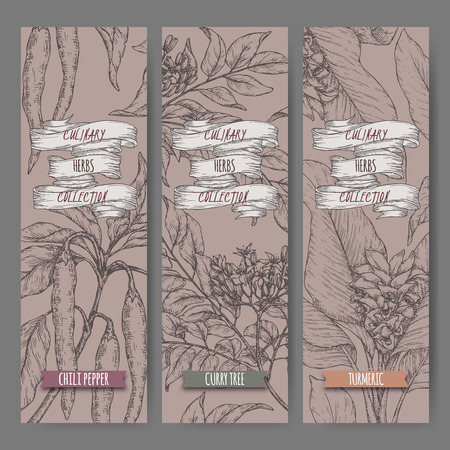 Three labels with chili pepper, curry tree and turmeric sketch. Culinary herbs collection. Great for cooking, medical, gardening design.