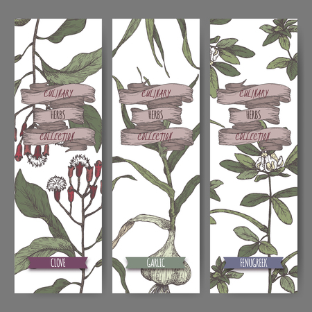 Three color labels with clove, fenugreek and garlic sketch. Culinary herbs collection. Great for cooking, medical, gardening design.