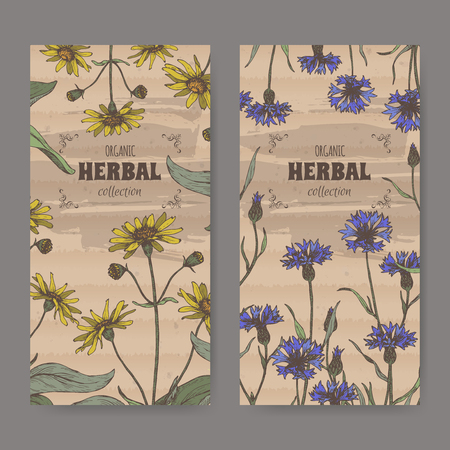 Set of two color labels with Arnica montana aka oountain arnica and Centaurea cyanus aka cornflower. Hadn drawn sketch. Herbal collection. Great for traditional medicine, or gardening. Ilustracja