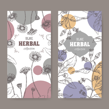 Set of two labels with Bellis perennis aka daisy and Atropa belladonna aka belladonna or deadly nightshade sketch. Hand drawn sketch. Herbal collection. Great for traditional medicine, or gardening. Illustration