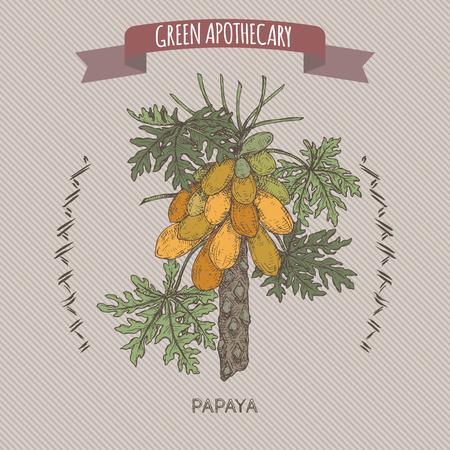 Carica papaya aka papaya tree color sketch. Green apothecary series. Great for traditional medicine, or gardening. Ilustração Vetorial