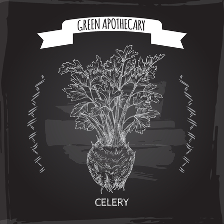 Apium graveolens aka celery sketch on black. Green apothecary series. Great for traditional medicine, or gardening.