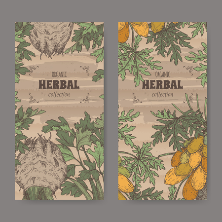 Two labels with apium graveolens aka celery and carica papaya aka papaya tree color sketch. Green apothecary series. Great for traditional medicine, or gardening.