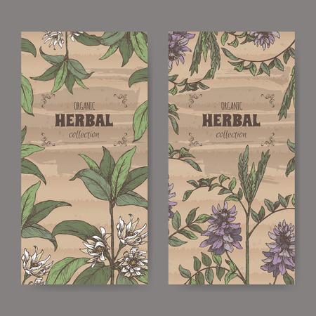 Due etichette con Illicium verum aka anice stellato o badiane e Glycyrrhiza glabra aka schizzo a colori di liquirizia. Serie di farmacia verde. Ottimo per la medicina tradizionale o il giardinaggio.