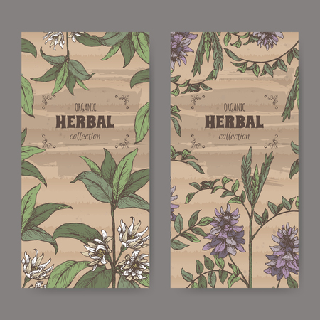 Two labels wuth Illicium verum aka star anise or badiane and Glycyrrhiza glabra aka liquorice color sketch. Green apothecary series. Great for traditional medicine, or gardening.