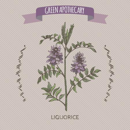 Glycyrrhiza glabra aka liquorice color sketch. Green apothecary series. Great for traditional medicine, or gardening.