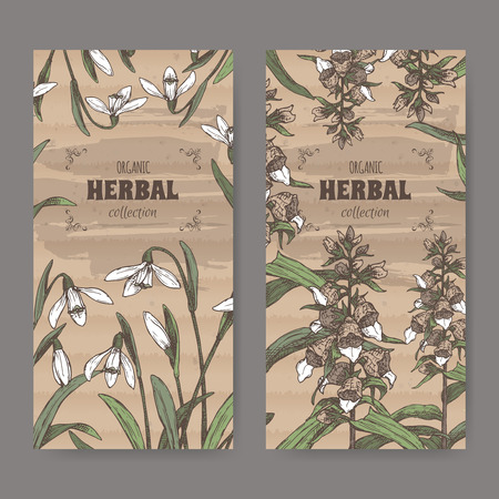 Two labels with Digitalis lanata aka woolly foxglove and Galanthus nivalis aka snowdrop color sketch. Green apothecary series. Great for traditional medicine, or gardening.
