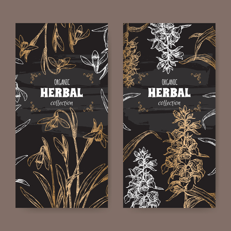Two labels with Digitalis lanata aka woolly foxglove and Galanthus nivalis aka snowdrop sketch on black. Green apothecary series. Great for traditional medicine, or gardening.