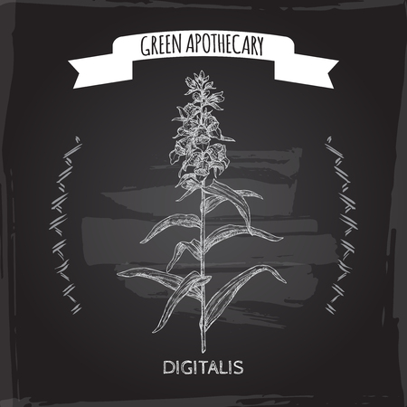 Digitalis lanata aka woolly foxglove sketch on black. Green apothecary series. Great for traditional medicine, or gardening.