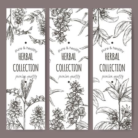 Three labels with star anise or badiane, liquorice and Digitalis lanata aka woolly foxglove sketch.