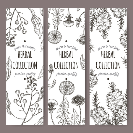 Set of three labels with camphorwood or camphor laurel, Dandelion and tea tree sketch. Green apothecary series. Great for traditional medicine, gardening or cooking.