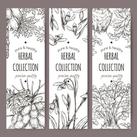 Three labels with apium graveolens aka celery, carica papaya aka papaya tree and Galanthus nivalis aka snowdrop sketch. Green apothecary series. Great for traditional medicine, or gardening.