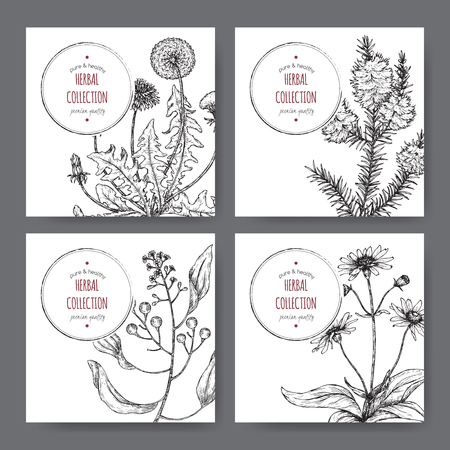 Four labels with camphor laurel, dandelion, tea tree and arnica sketch. Green apothecary series. Great for traditional medicine, gardening or cooking.