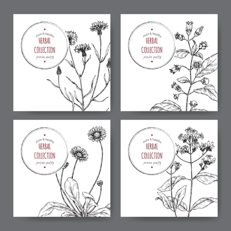 Four labels with belladonna, cinchona, cornflower and daisy sketch. Green apothecary series.  イラスト・ベクター素材