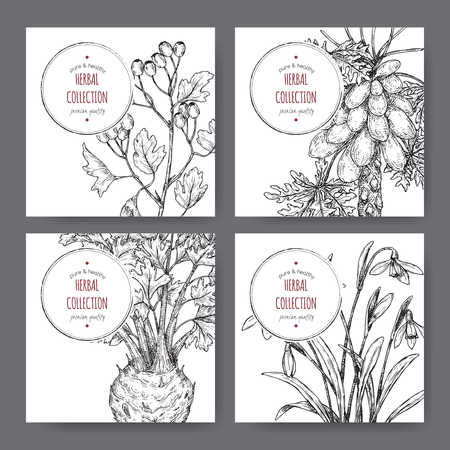 Four labels with common hawthorn, celery, papaya tree and snowdrop sketch.