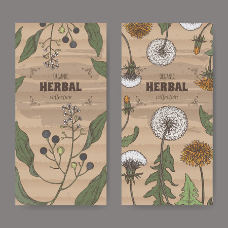 Set of two labels with camphorwood or camphor laurel and Dandelion color sketch. Green apothecary series.