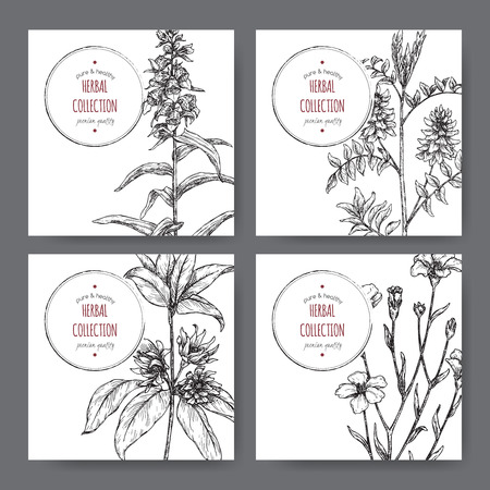 Four labels with star anise or badiane, liquorice, Digitalis and common flax sketch. 写真素材