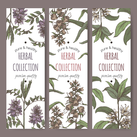Three color labels with star anise or badiane, liquorice and Digitalis lanata aka woolly foxglove sketch. Иллюстрация