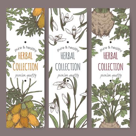 Three color labels with apium graveolens aka celery, carica papaya aka papaya tree and Galanthus nivalis aka snowdrop sketch. Green apothecary series. Great for traditional medicine, or gardening.