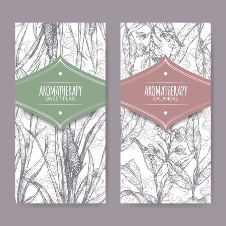 Deux étiquettes avec Acorus calamus aka sweet flag et Alpinia galanga aka grand galanga sketch Vecteurs