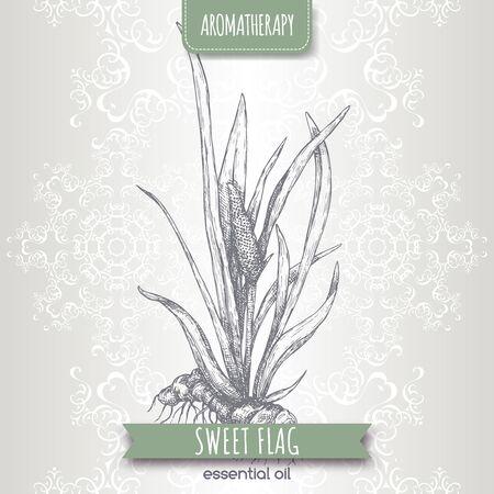 Acorus calamus aka sweet flag sketch on elegant lace
