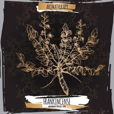 Boswellia sacra aka frankincense sketch on elegant black lace background. Great for traditional medicine, perfume design, cooking or gardening. Stock Illustratie